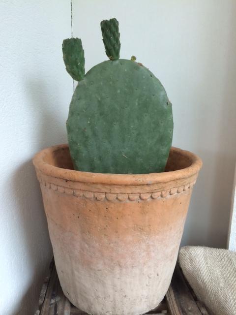 Dagen jeg forelsket meg i en kaktus